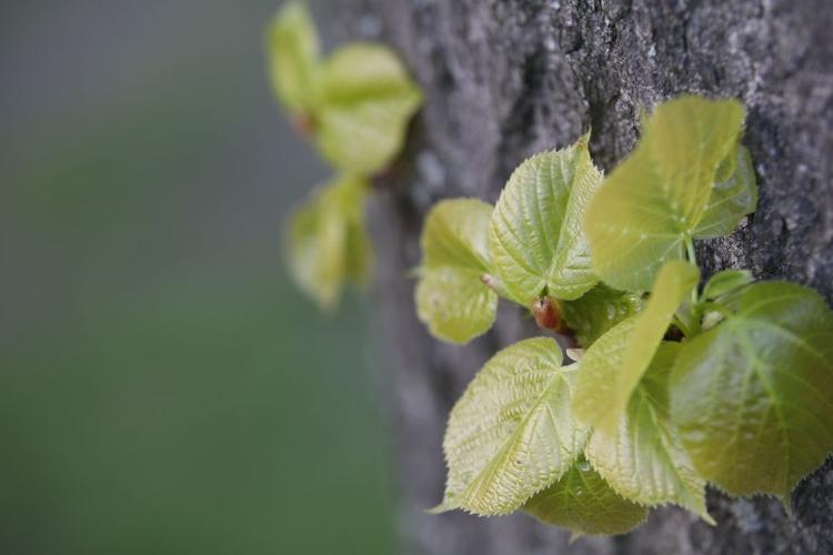 Wyświetl zdjęcie JPEG w pełnej rozdzielczości   Aparat: Canon EOS 80D + Sigma Art 50-100 mm f/1,8 Ustawienia: ISO 200, f/2,8, 1/125 s, 100 mm