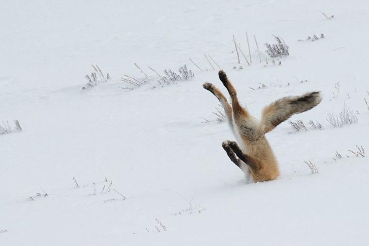 Poznaliśmy zwycięzców Comedy Wildlife Photography Awards