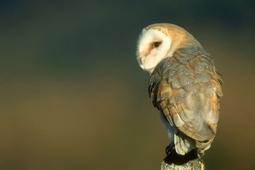 14 sposobów na najlepsze uchwycenie ptaków