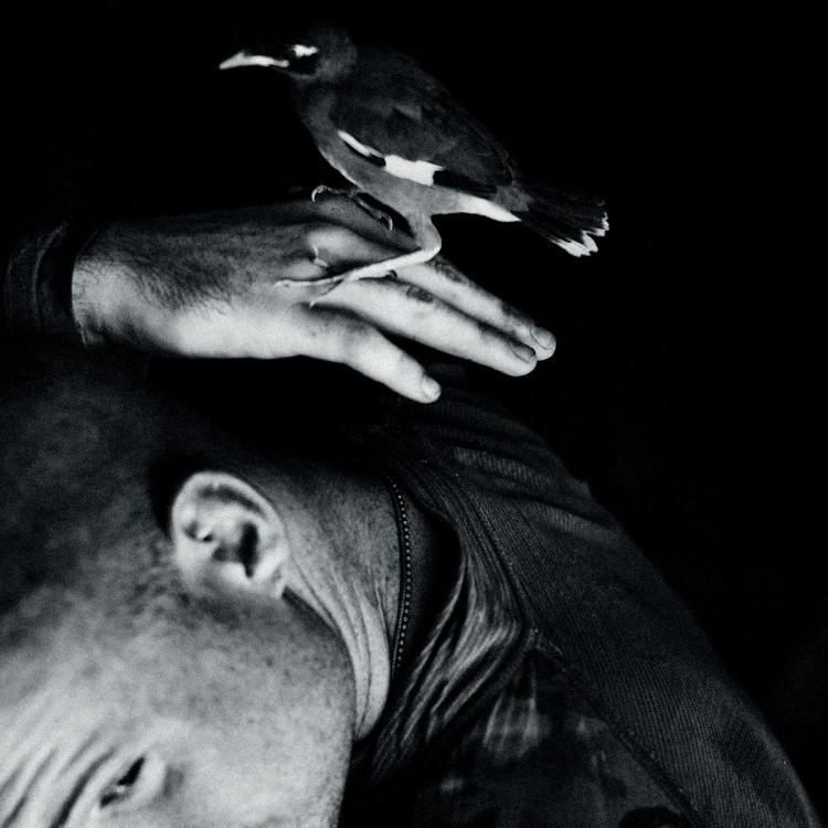 Przerwa w nalotach i chwila odprężenia. Ptak przysiadł na dłoni żołnierza, fot. Dima Gavrysh.