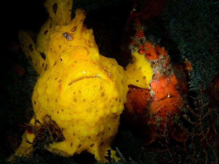 """""""Excuse me"""" - zwycięskie zdjęcie w kategorii """"Underwater"""" - fot. Jim Chen"""