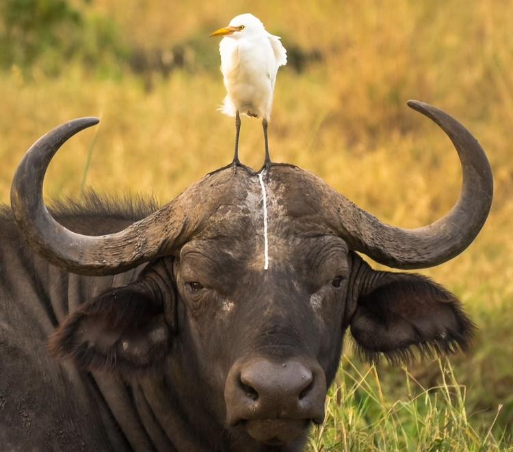 """""""Head shot"""" - jedno z kilku najczęściej komentowanych zdjęć - fot. Tom Stables"""
