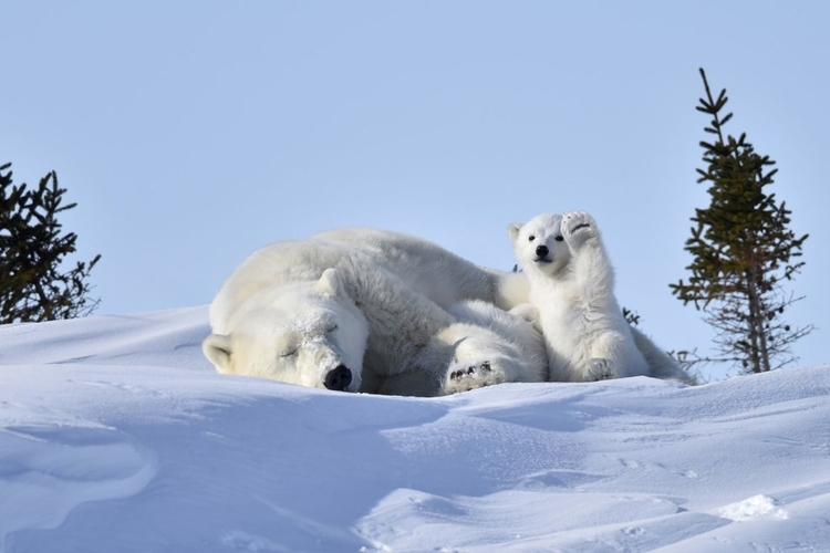 """""""Hello!"""" - jedno z kilku najczęściej komentowanych zdjęć - fot.  Philip Marazzi"""