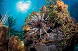 George Stoyle i jego podwodny świat