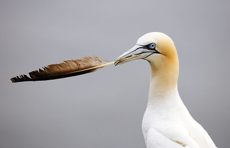Znalezione obrazy dla zapytania: kompozycji otwartej ptaki