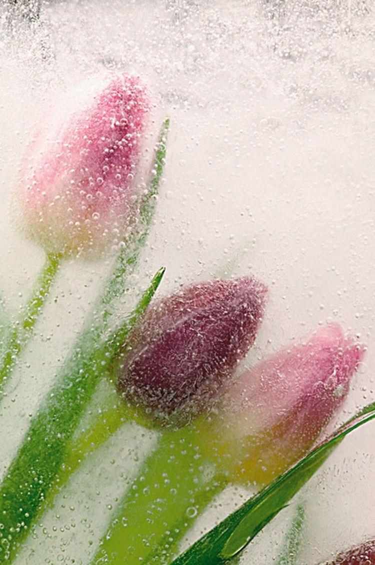 Zamrozić i sfotografować - kreatywne zdjęcia kwiatów