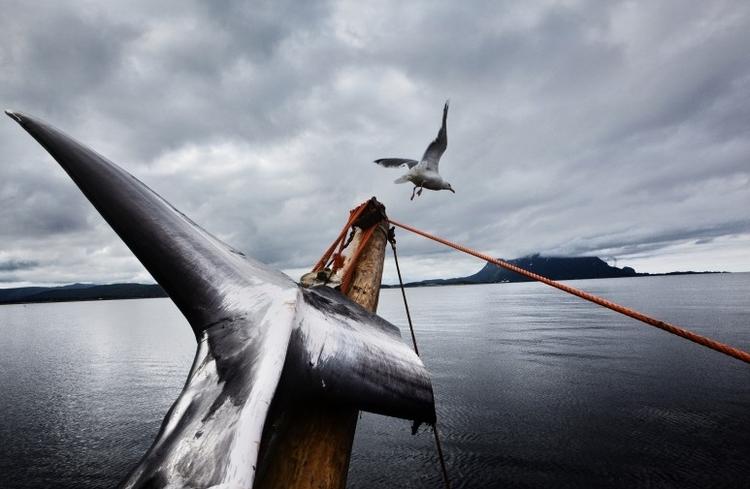 """III nagroda w kat. Problemy współczesne - reportaż, """"Last of the Vikings """", fot. Marcus Bleasdale"""