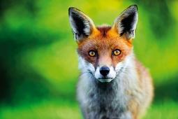 Fotografowanie dzikich zwierząt od podstaw