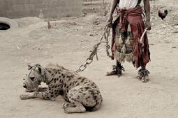 Nigeryjskie koszmary Pietera Hugo