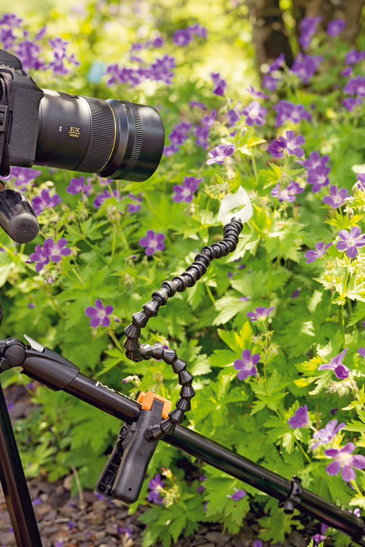 """Przytrzymaj kwiaty Fotografując w wietrznych warunkach, nie jest łatwo wykonać ostre zdjęcia kwiatów. Można użyć lampy błyskowej, aby """"zamrozić"""" kołyszącą się łodygę, lub zwiększyć czułość matrycy. Jest jednak lepsze rozwiązanie – przymocowanie rośliny do statywu. Pomoże Ci w tym giętkie ramię do makrofotografii, na przykład Wimberley Plamp za ok. 180 zł."""
