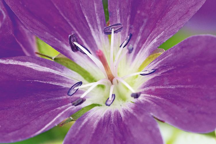 Wykonaj zdjęcie Teraz skomponuj kadr. Umieść kwiat we właściwym miejscu i ustaw głowicę statywu. W tym celu najlepiej jest użyć trybu podglądu obrazu na żywo. Jeśli uda Ci się unieruchomić kwiat, to wykonując fotografię przy użyciu tych samych parametrów ekspozycji, powinieneś zarejestrować obraz ostry jak brzytwa.