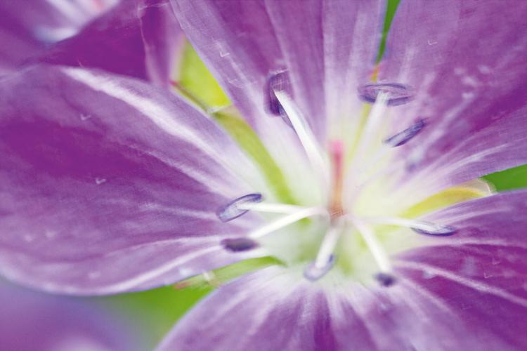 Pokonaj wiatr To zdjęcie wykonano bez zamocowania. Długi czas otwarcia migawki, wynoszący 1/13 s, i wiatr spowodowały, że obraz kwiatu się rozmył. Aby rozwiązać ten problem, zaciśnij większą klamrę mocującą elastycznego ramienia na nodze statywu, a drugą u szczytu łodygi kwiatu. Uważaj tylko, by jej nie przeciąć.