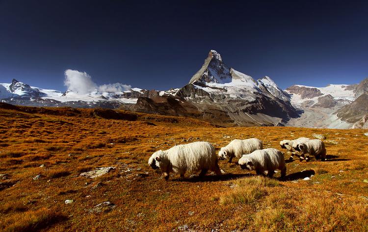 zdjęcie Karola Nienartowicza. Polana Hochbalmen nieopodal Matterhornu.