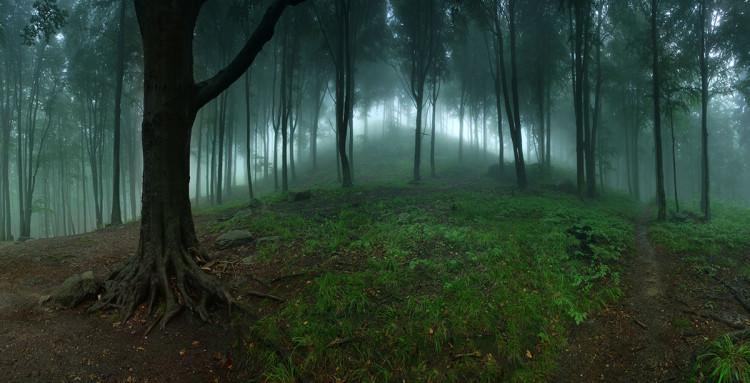 Karkonoski las podczas deszczu, fotograf Karol Nienartowicz