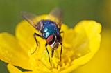 Fotografuj w ogrodzie - nie tylko kwiaty