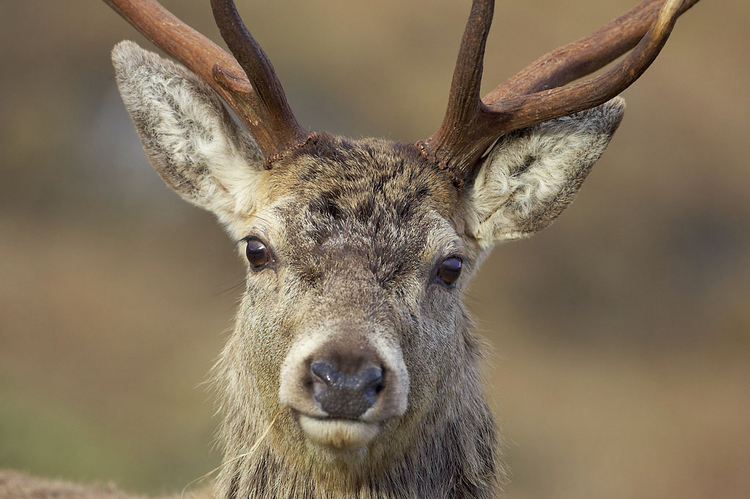 Kompozycja obrazu Rób portret albo samej głowy, albo od tułowia w górę. Jeśli jest to małe zwierzę, lepiej będzie uwiecznić je w całości. Ustawiaj ostrość na oczach. Symetryczne portrety prezentują się znakomicie, ale nie bój się spróbować czegoś bardziej niezwykłego, na przykład ukazania tylko jednej strony pyska zwierzęcia. Fot. Mark Hamblin