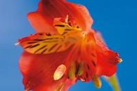 Zdjęcia kwiatów w domowym studio