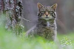 Jak wykonać portrety dzikim zwierzętom