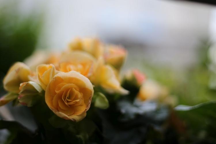 Wyświetl zdjęcie JPEG w pełnej rozdzielczości   Aparat: Canon EOS 6D + Canon EF 50 mm f/1,8 STM Ustawienia: ISO 200, f/1,8, 1/400 s, 50 mm