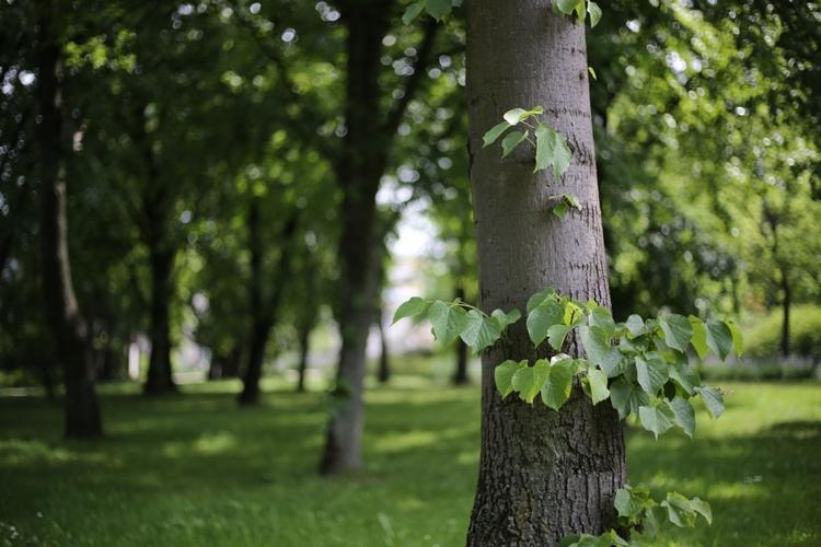 Wyświetl zdjęcie JPEG w pełnej rozdzielczości   Aparat: Canon EOS 6D + Canon EF 50 mm f/1,8 STM Ustawienia: ISO 100, f/1,8, 1/640 s, 50 mm