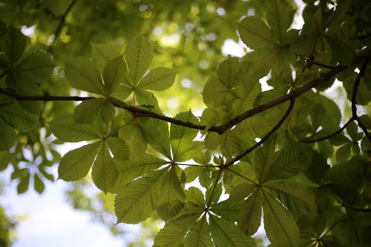 Wyświetl zdjęcie JPEG w pełnej rozdzielczości   Aparat: Canon EOS 6D + Canon EF 50 mm f/1,8 STM Ustawienia: ISO 100, f/1,8, 1/800 s, 50 mm