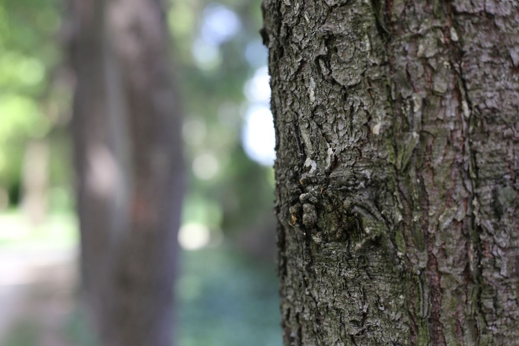 Wyświetl zdjęcie JPEG w pełnej rozdzielczości   Aparat: Canon EOS 6D + Canon EF 50 mm f/1,8 STM Ustawienia: ISO 400, f/4,0, 1/100 s, 50 mm