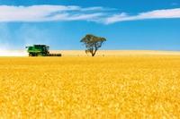 Daj się wyprowadzić w pole i rób zdjęcia na wsi