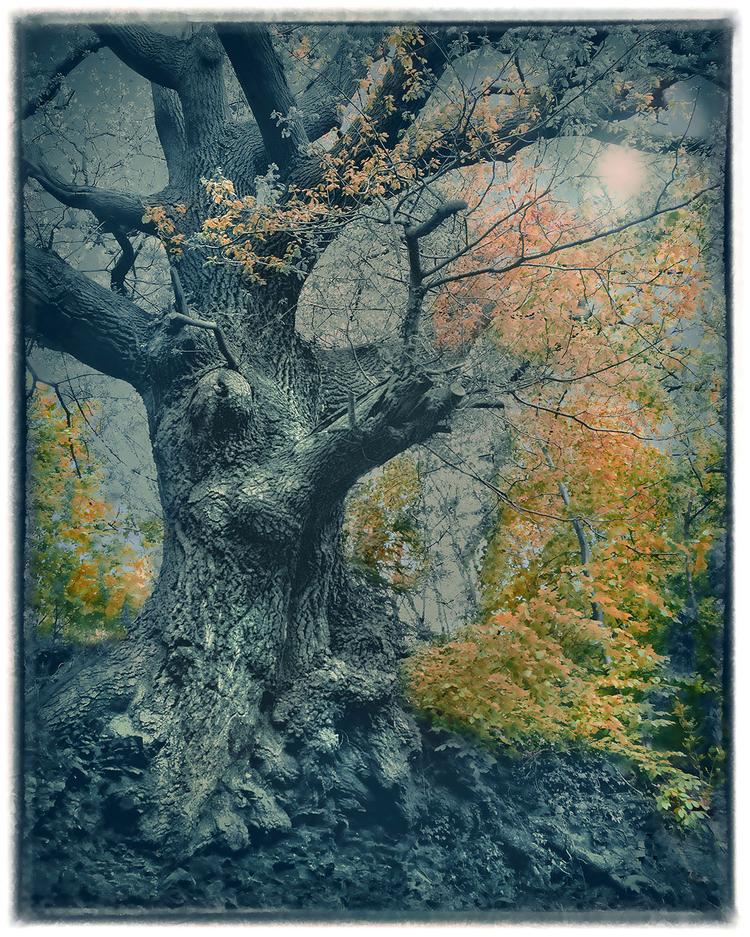 Dąb Barry minął to wspaniałe drzewo, wracając z wyprawy na szczyt Snowdon. Zszokowało go to, że dąb przetrwał, pomimo tego, że wyrósł właściwie na skale. Fotograf chciał, aby obraz był tak samo ponadczasowy, jak drzewo, zatem usunął kolor z obrazu, a następnie nadał mu subtelnie niebieski odcień. Później, wykorzystując tablet graficzny, delikatnie przywrócił kolor tam, gdzie uważał to za stosowne.