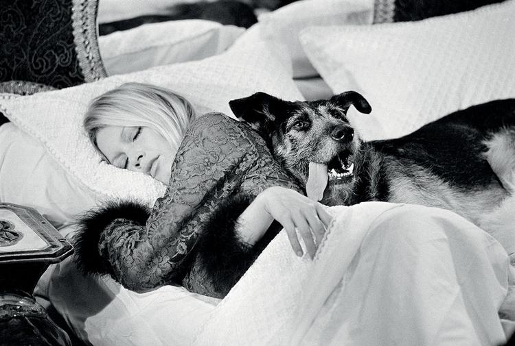 """""""Pies nie należał do Bardot, lecz do jej makijażystki. Sfotografowałem aktorkę, kiedy udała się na popołudniowy odpoczynek"""", fot. Terry O'Neill"""