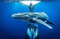 10. Wielki Konkurs Fotograficzny National Geographic rozstrzygnięty