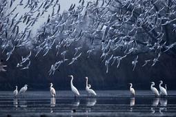 Wystawa zdjęć konkursu fotograficznego National Geographic
