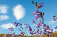 Kwitnące cuda, czyli jak fotografować kwiaty