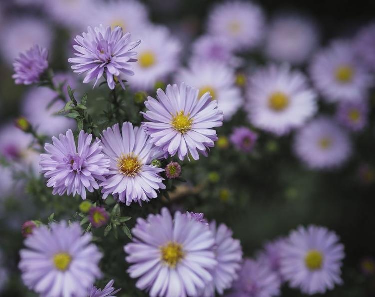 Znajdź odpowiedni temat Wybierz kwiaty w idealnym stanie, rosnące w odpowiednim miejscu i na czystym tle. Z dużą ostrożnością usuń lekko zwiędnięte lub rozpraszające uwagę i znajdujące się wokół uschnięte liście. Znajdź pasujący kadr, a następnie zamocuj aparat na statywie.