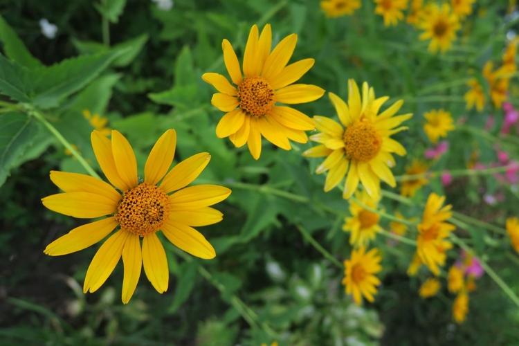 Zmień swoje podejście Skorzystaj z szerokiego kąta, aby ukazać też otoczenie, w jakim rośnie kwiat. Zrób ujęcie na tle dalekiego planu teleobiektywem. Wykonując zbliżenia, używaj f/16. Natomiast abstrakcyjne ujęcia rób, wypełniając tematem cały kadr i maksymalnie otwierając przysłonę.