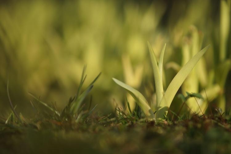 Próbuj fotografować z różnej perspektywy Szukaj niecodziennych punktów widzenia, dzięki którym Twoje fotografie będą się wyróżniać. Spróbuj położyć aparat na ziemi i skierować obiektyw w górę w stronę kępy kwiatów, po czym wyzwól migawkę za pomocą samowyzwalacza.