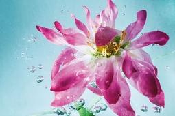Jak wykonać dynamiczne zdjęcia kwiatów zanurzonych w wodzie