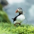 Jak fotografować dziką przyrodę [poradnik w DCP]