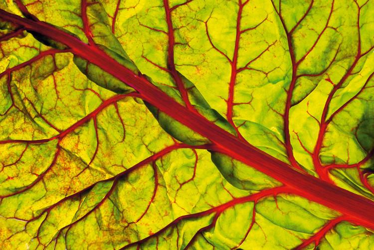 Zdjęcie żywności. Burak liściowy, 2013, fot. Francesco Tonelli