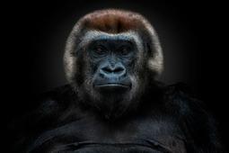 Odkryj ludzką twarz zwierząt