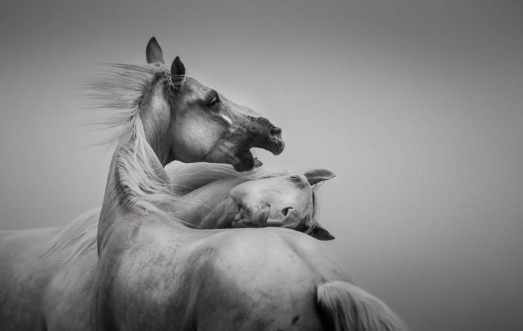 """""""Taniec we mgle"""", I miejsce w kategorii """"Zwierzęta"""", fot. Katarzyna Okrzesik-Mikołajek"""
