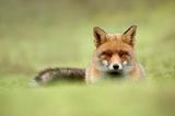 Fotografuj odpoczywające zwierzaki jak Roeselien Raimond