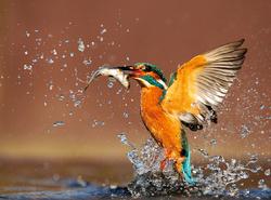 Temat numeru – Naucz się fotografować dzikie zwierzęta