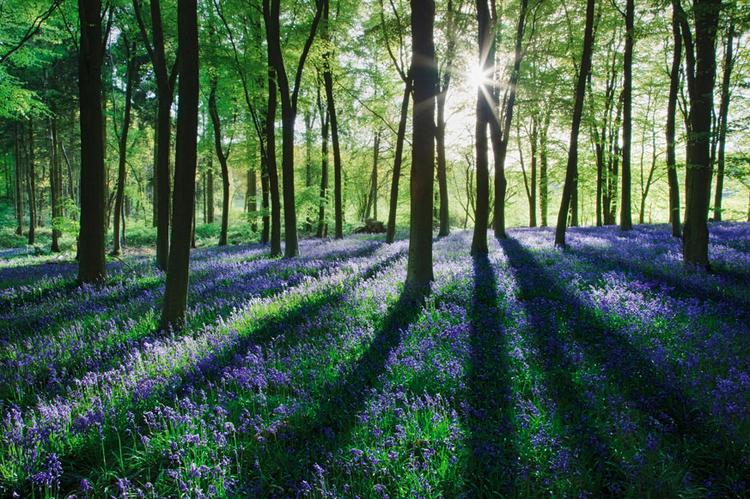 Fotografowanie pod słońce sprawia, że liście i drzewa zyskują ciekawe tylne podświetlenie, dodatkowo pojawiają się mocne cienie, które mogą urozmaicić kompozycję, dlatego komponując zdjęcie, trzeba o tym pamiętać; fot. Guy Edwardes