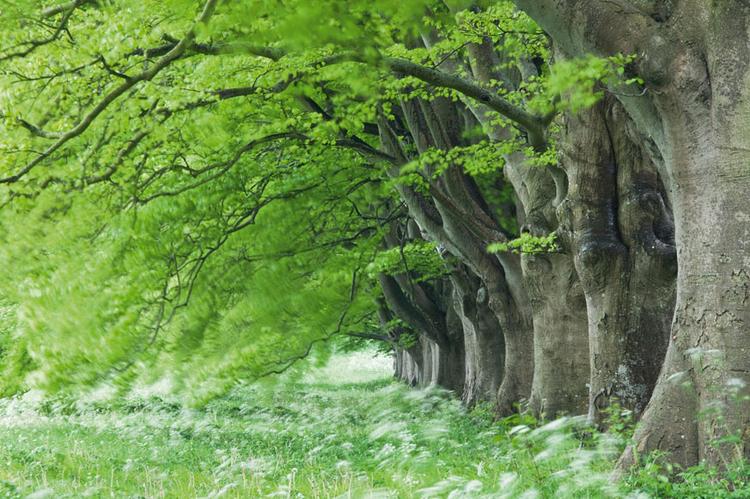 Rozmycie w zdjęciach krajobrazowych nie jest raczej często stosowaną techniką, jednak zdjęcie zrobione w wietrzny dzień, z 30 s ekspozycją oddaje nastrój sceny. Rozmyte korony drzew to bardzo efektowny widok; fot. Guy Edwardes