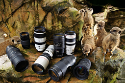 Teleobiektywy do fotografowania dzikiej przyrody  [test w DCP]