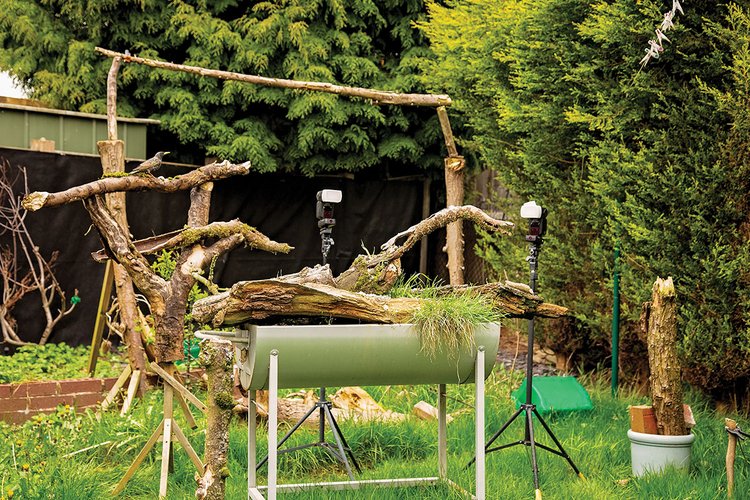 """Znajdź miejsce w ogrodzie na """"karmnik"""". Aby zwabić ptaki, użyj jedzenia i kwiatów. Ade zauważył, że lawenda i powojnik przyciągają owady, a także sugeruje użycie krzewów ognika i spróchniałego drewna. Najlepiej, jeśli możesz umieścić na jakimś obszarze nieco spróchniałych pni i gałęzi, w których zamieszkają owady będące źródłem pożywienia dla ptaków, a do tego ukryć wśród nich różne smakołyki. Aby uzyskać czarne tło, Ade zawiesił na ogrodzeniu czarną tkaninę wchłaniającą wodę."""
