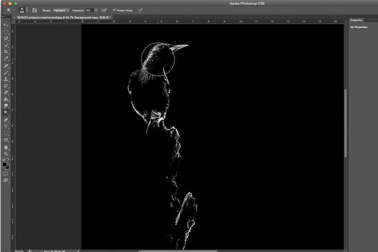 Jeśli chodzi o edycję takich obrazów, to najlepiej jest zapisywać zdjęcia w trybie RAW i konwertować je do odcieni szarości. Można to zrobić za pomocą wielu różnych programów. Ade używa suwaków regulujących widoczność jasnych i ciemnych odcieni do wydobywania lub ukrywania szczegółów. Z kolei dostępne w Photoshopie narzędzia Ściemnij i Rozjaśnianie przydają się do podkreślania detali i zwiększania kontrastu.