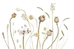 Sztuka błyskania - piękno suchych roślin