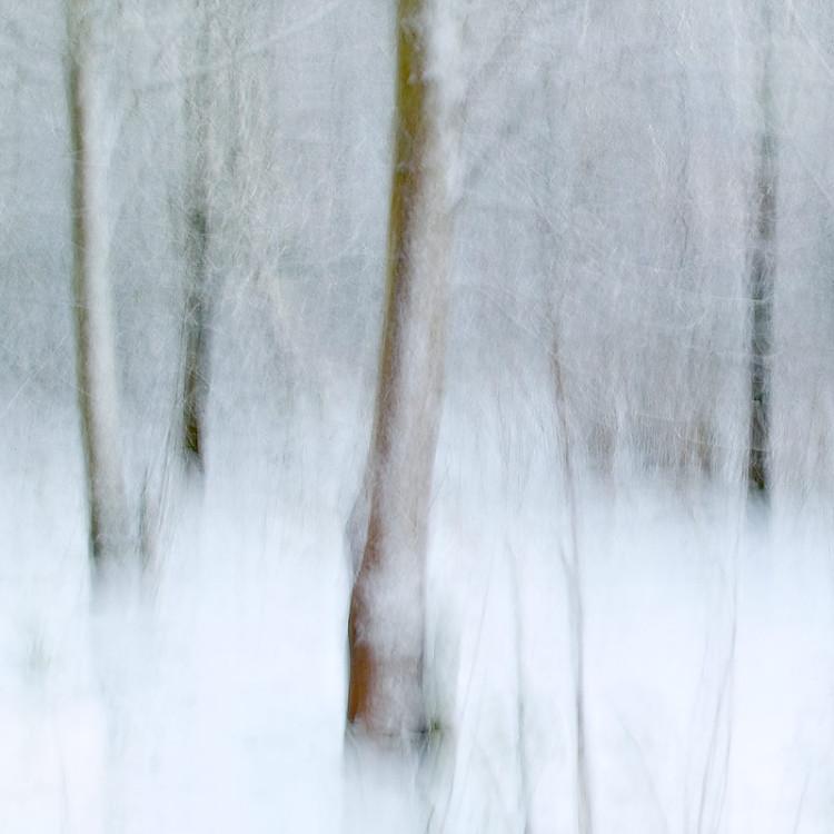 zimowy krajobraz - rozmyte zdjęcie krajobrazowe