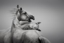 Majestat koni na zdjęciach Katarzyny Okrzesik-Mikołajek